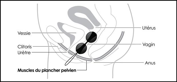 les boules de geisha le compl ment votre r ducation du plancher pelvien. Black Bedroom Furniture Sets. Home Design Ideas